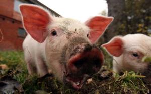 Ty świnio... ;)