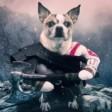 Pies wojny!